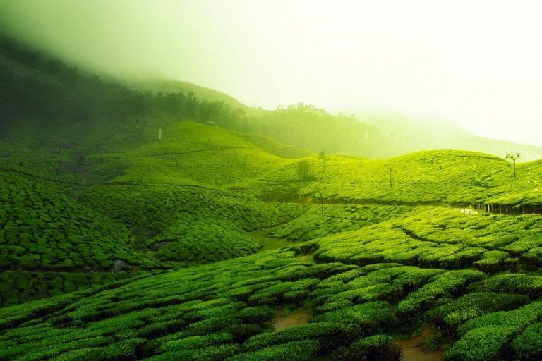 Comment le tourisme rural en Inde survivra-t-il à la crise du COVID?