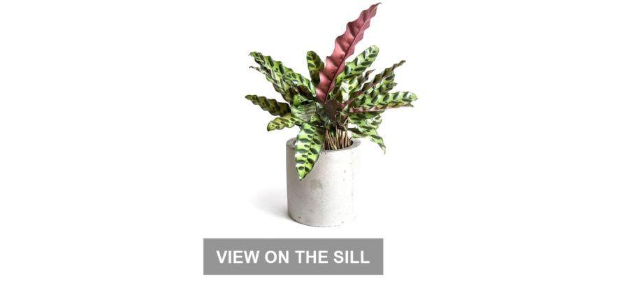 Cadeaux de travail à domicile: plantes d'intérieur
