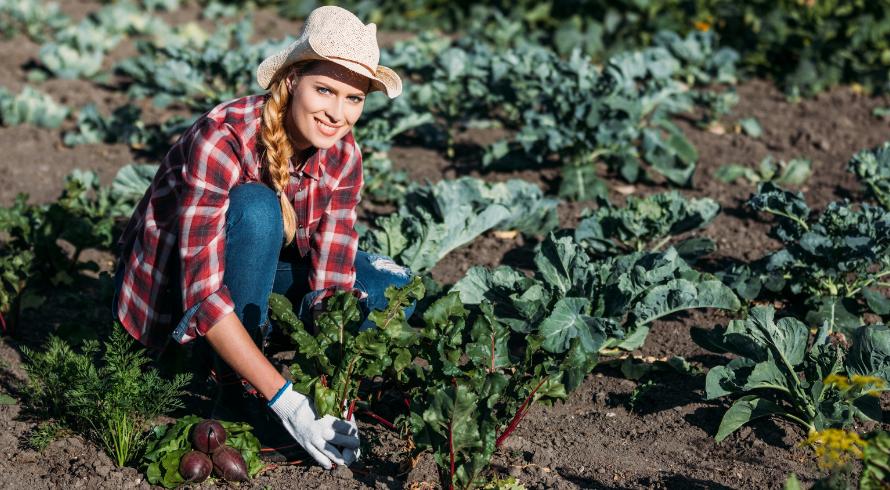 Fermier d'un jour – 10 fermes, où vous pouvez essayer l'expérience rurale