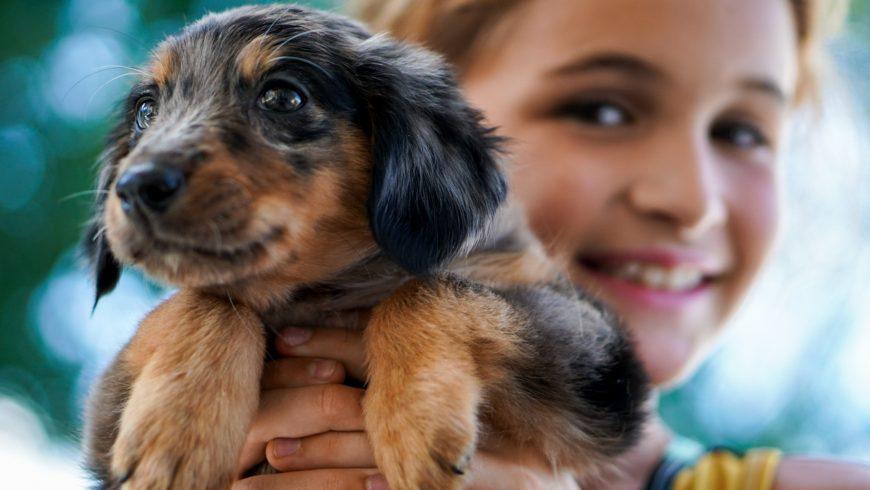 petit chien qui grandit avec un enfant