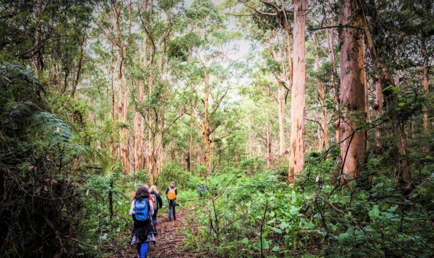 Faut-il que tout soit de l'écotourisme?  Repenser les voyages et le tourisme en 2021