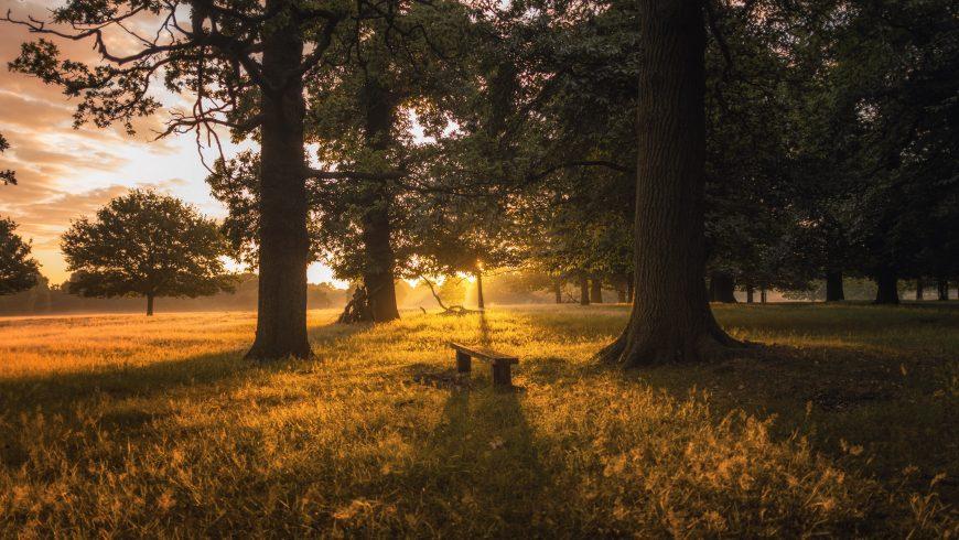 Dormir en plein air: cabanes dans les arbres, maisons en pierre et plus