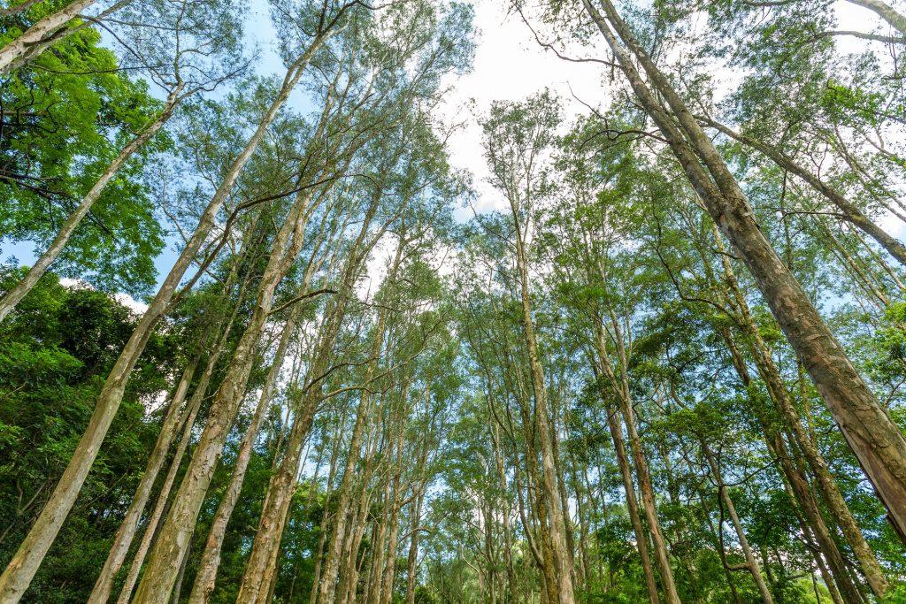 Forêt et ciel