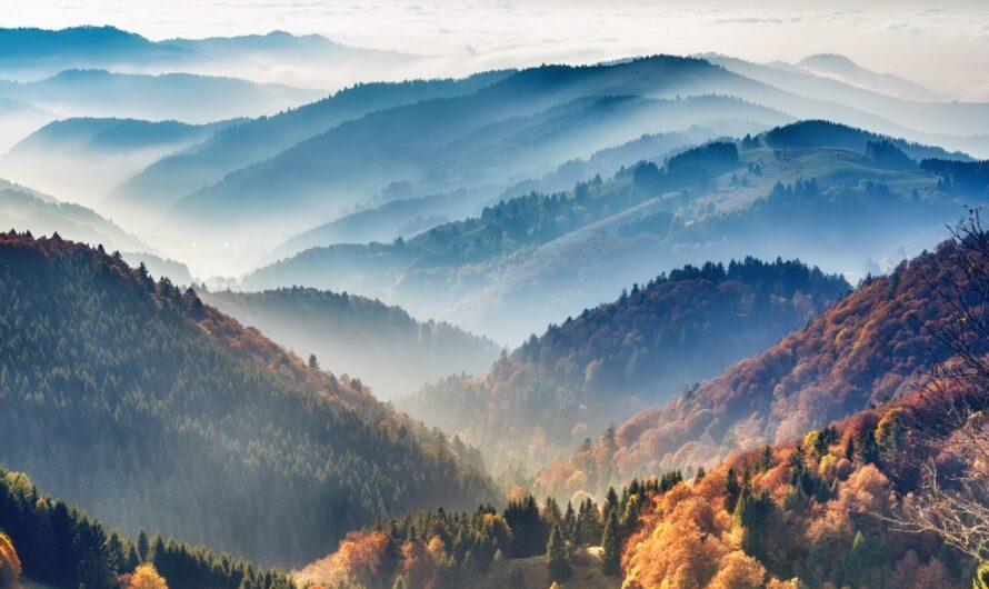 Que faites-vous lorsque la compensation carbone est décourageante?  Plantez des arbres pour voyager