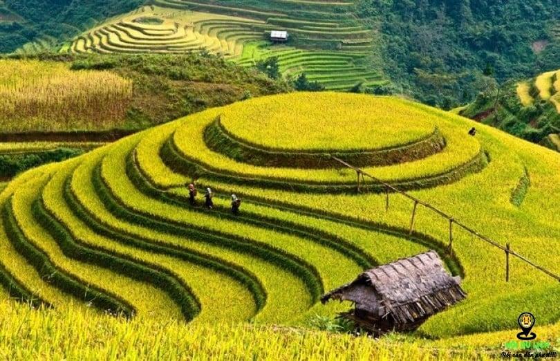 Vietnam-nature