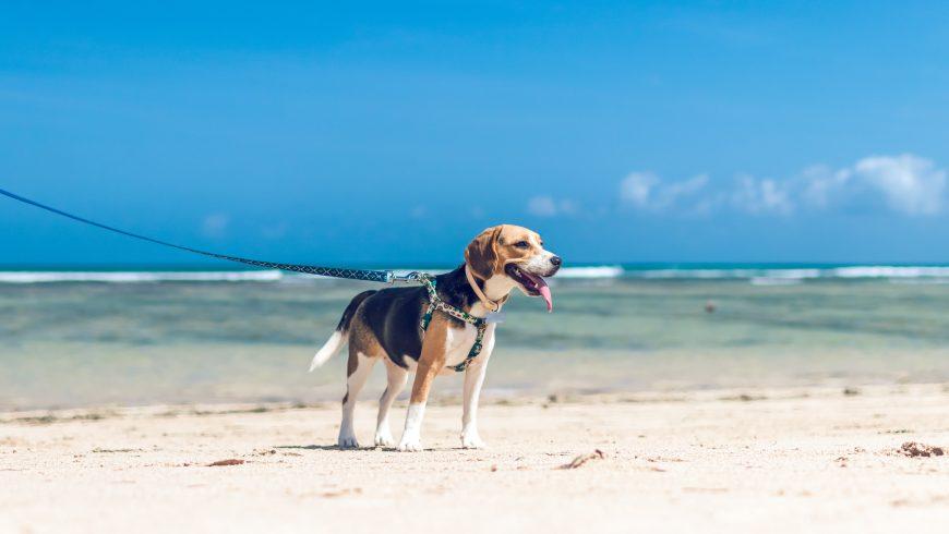 Voyager avec des chiens: 6 conseils pour un voyage réussi