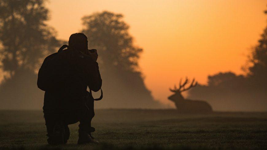 Guide de base de la photographie animalière 2021
