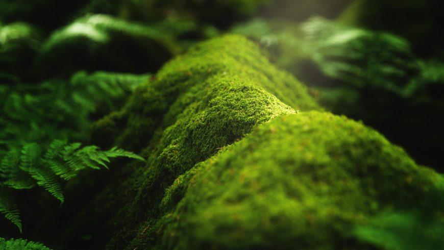 Biodiversité: mousse