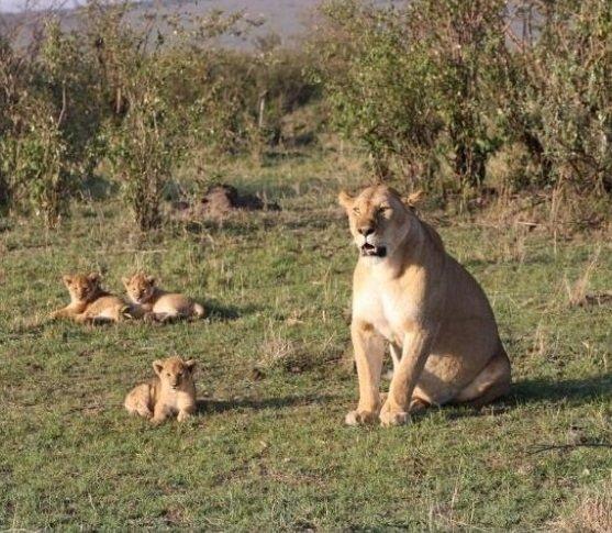 Comment planifier un safari de luxe dans le Masai Mara depuis l'Inde