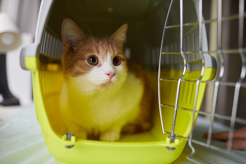 Animal de compagnie dans une clinique vétérinaire