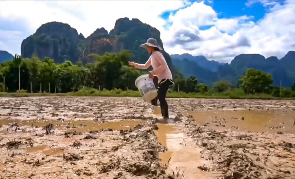 Les jardins potagers de l'hôtel Silver Naga sont situés dans le paysage karstique de Vang Vieng, au Laos