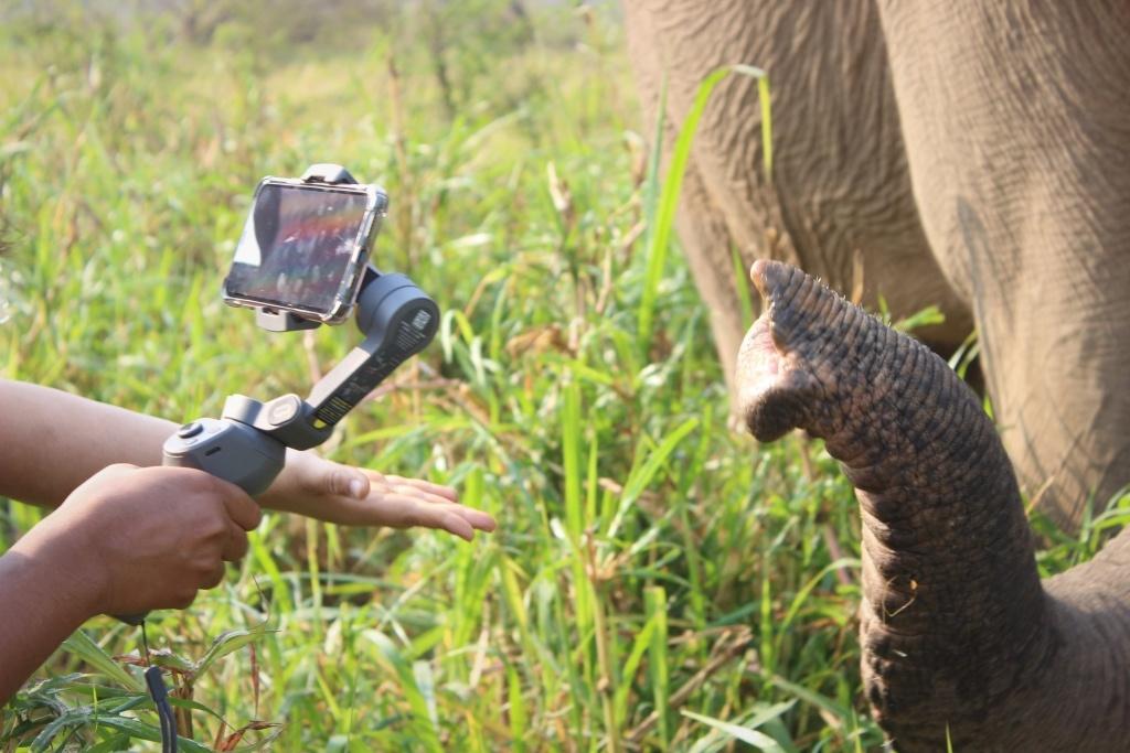 Les livestreams de collecte de fonds sont le meilleur espoir pour les éléphants au chômage en Thaïlande.  Photo fournie par John Roberts.