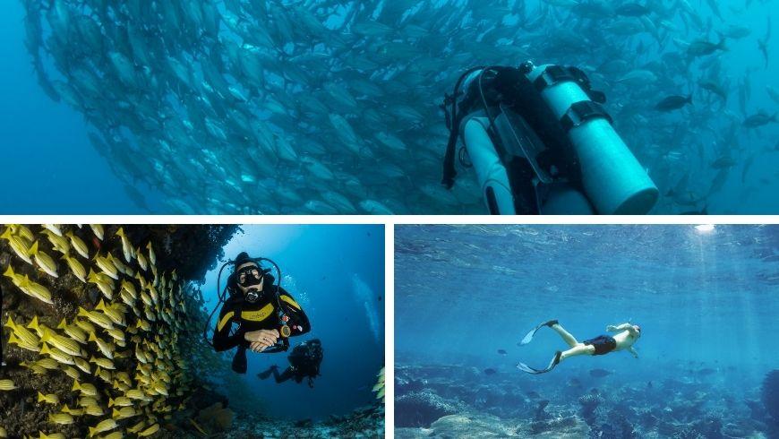 Un monde sous la mer