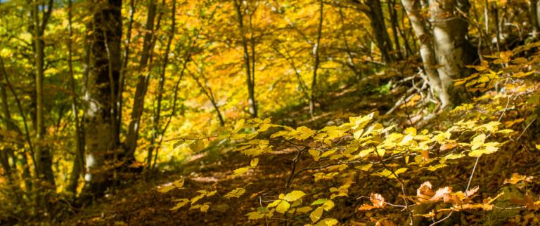 Parmi les bois et les ermitages, voici Foreste Casentinesi, Monte Falterona, Parc National de Campigna