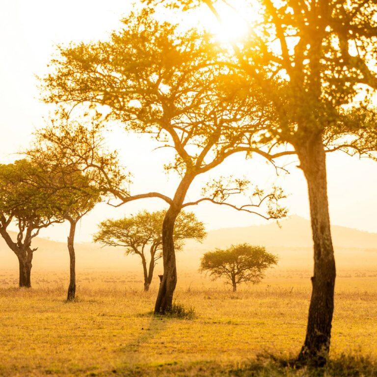 Comment ces safaris africains renouent avec la nature