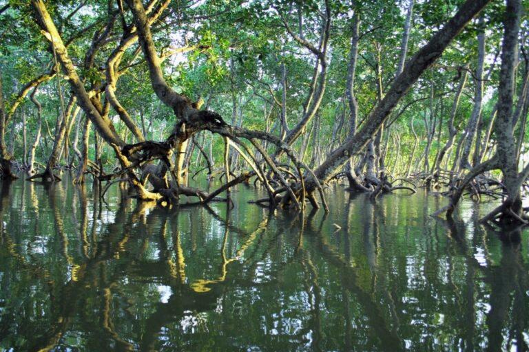 Comment le tourisme peut-il protéger et promouvoir les mangroves ?