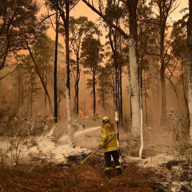 Incendies en Australie: que se passe-t-il et comment vous pouvez aider