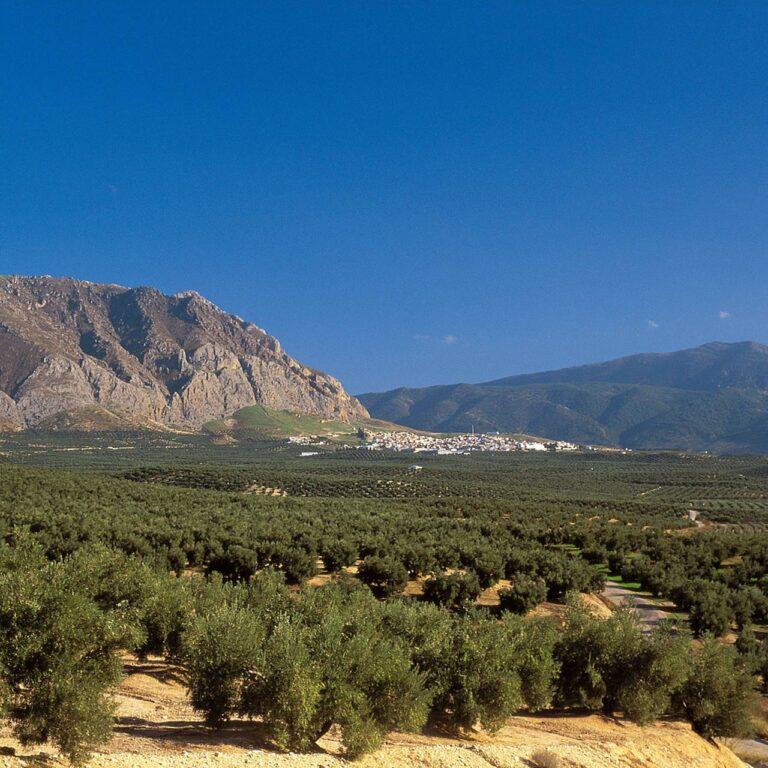 Les régions oléicoles d'Espagne : les meilleures huiles d'olive