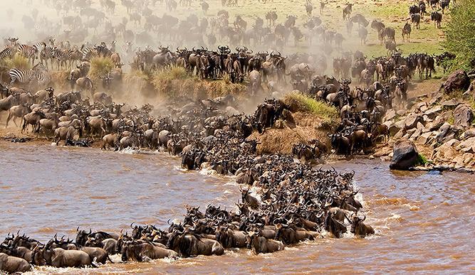 Tests COVID-19 sans tracas pour les touristes visitant la migration du Serengeti