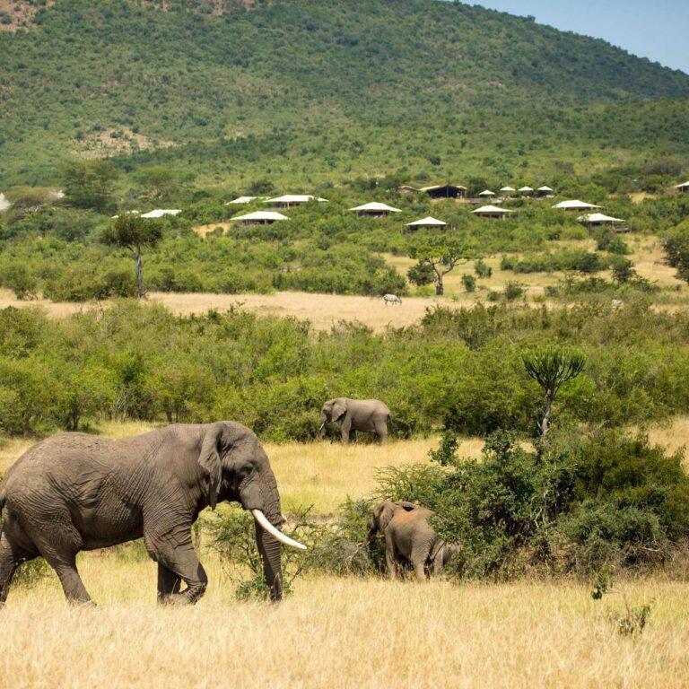 Pourquoi est-ce le moment idéal pour planifier des vacances safari ?